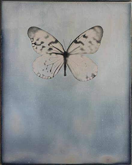 Adam Fuss-Untitled-2012