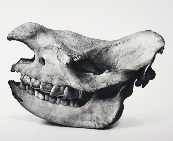 Irving Penn-Black Rhino, Prague-1986