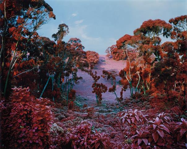 Richard Mosse-The Crystal World-2011