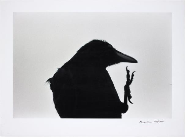 Masahisa Fukase-Erimo Misaki, Cape Erimo From, Karasu Ravens-1976