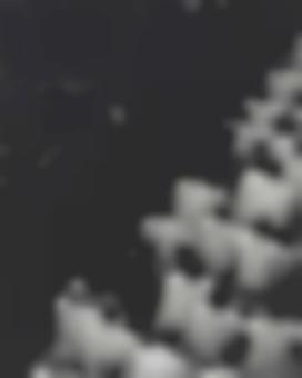 Shirin Neshat-Fervor Series-2000