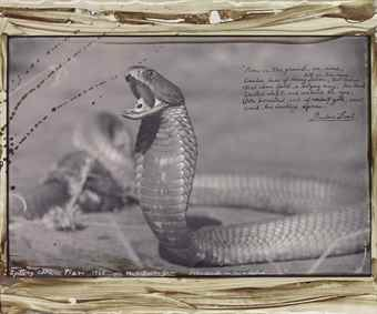 Peter Beard-Spitting Cobra, Tsavo-1960