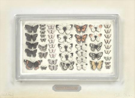 Graham Clarke-British Butterflies-