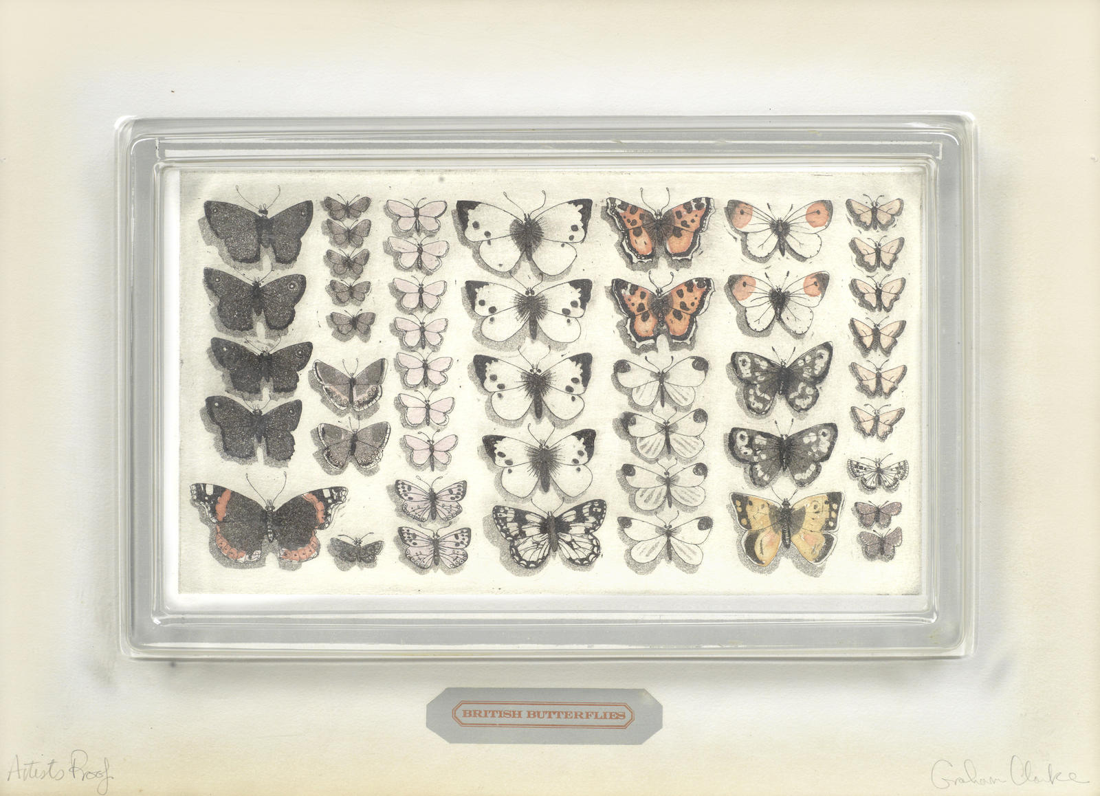 Graham Clarke-British Butterflies-