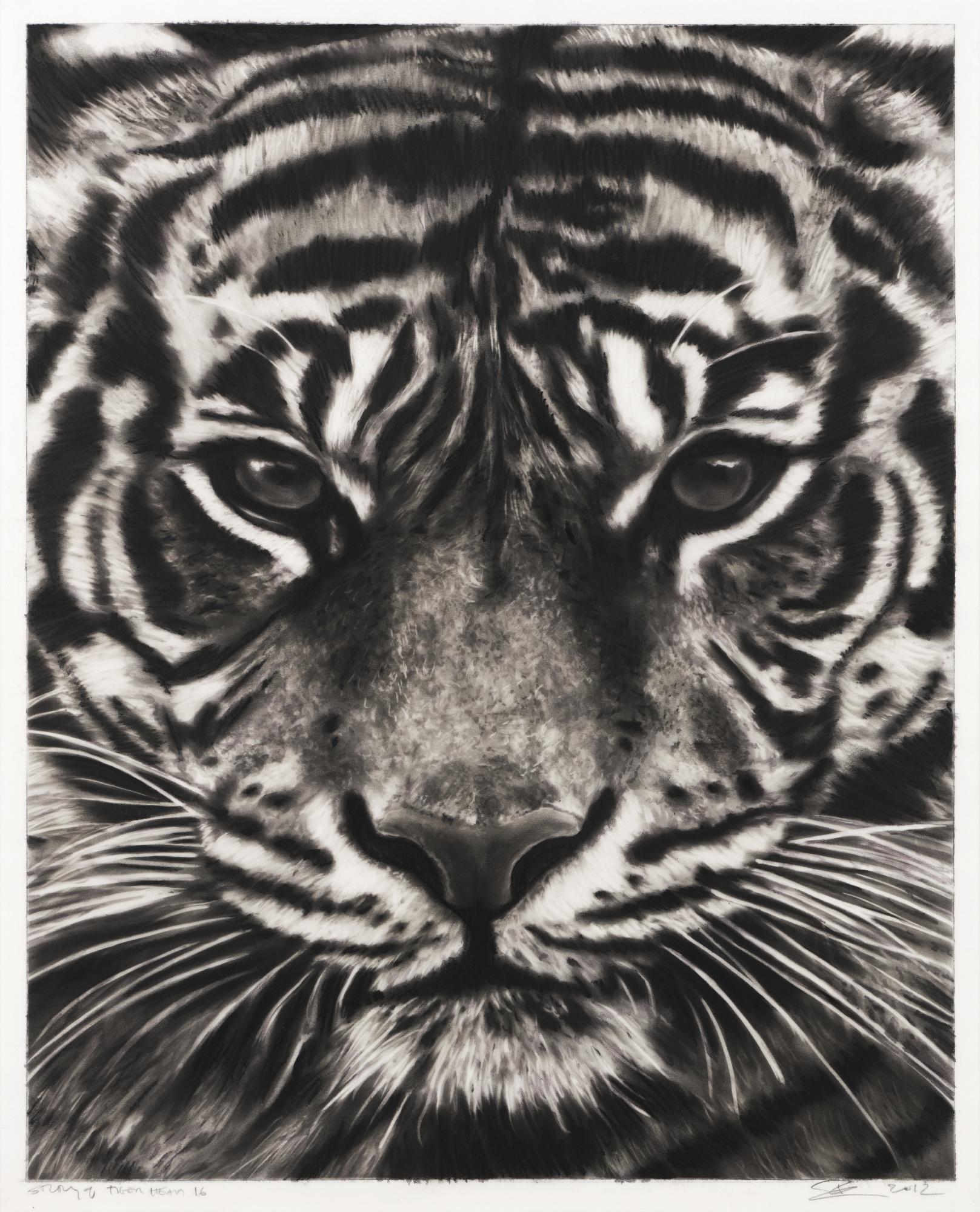 Robert Longo-Study Of Tiger Head 16-2012