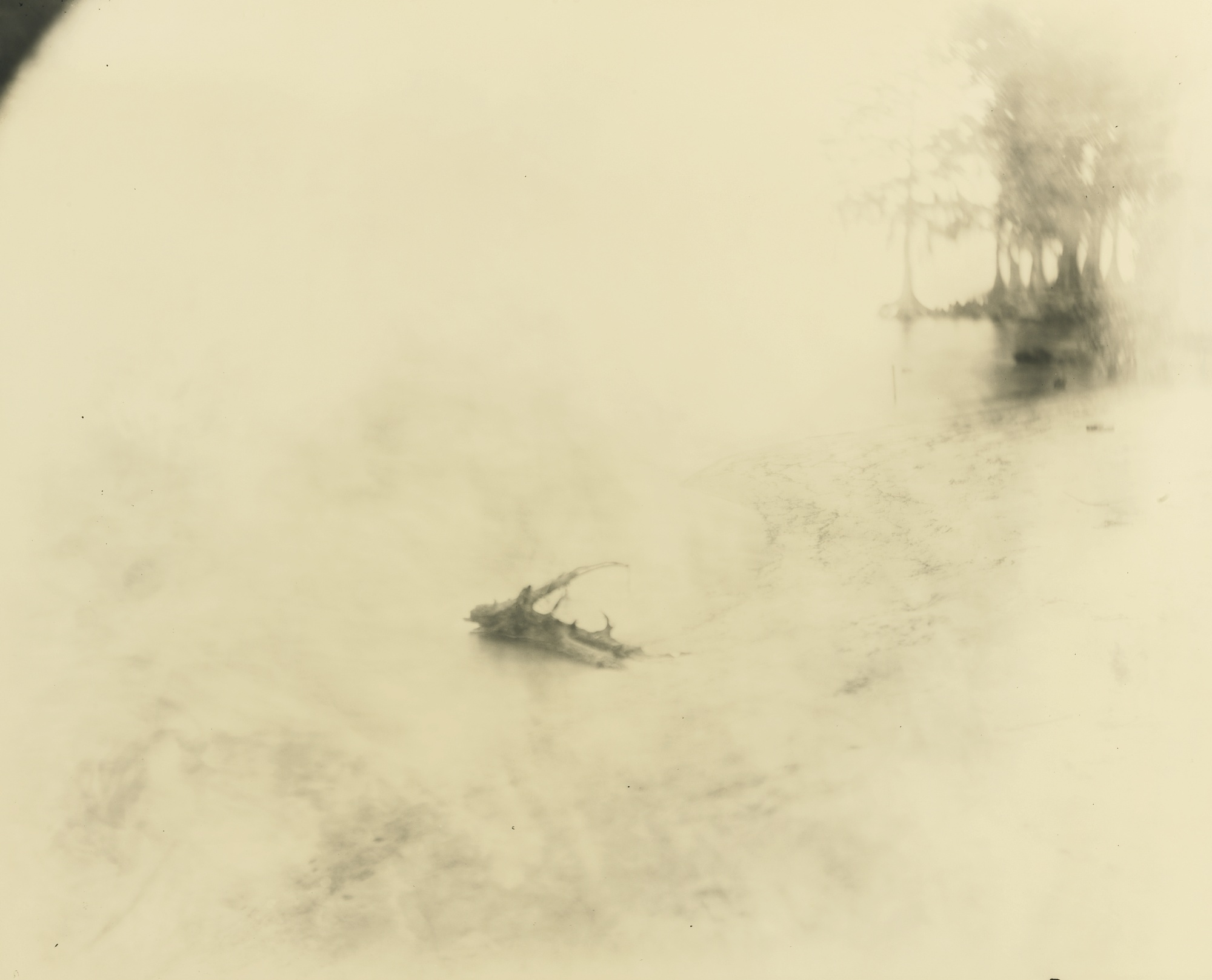 Sally Mann-Untitled (Deep South #21)-1998