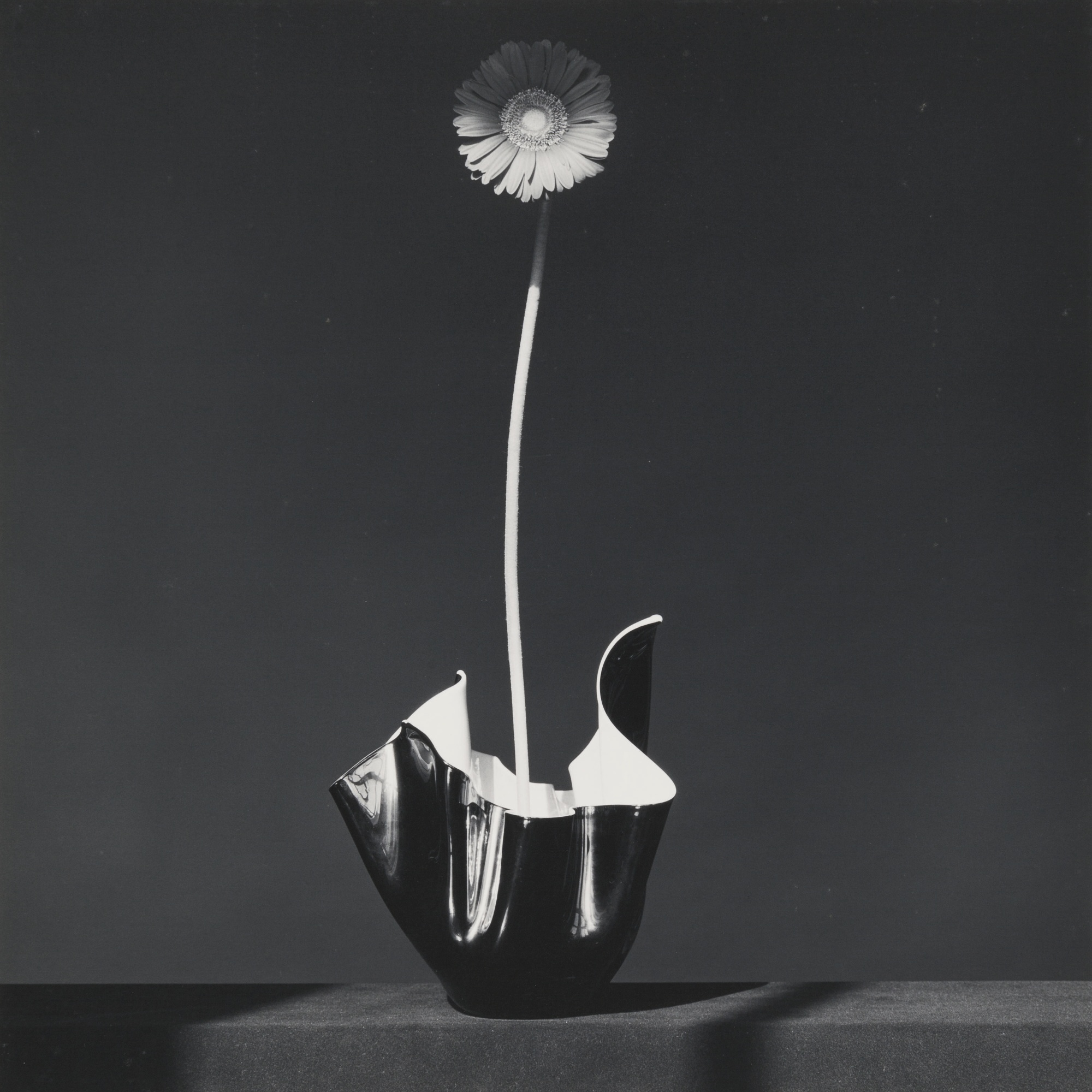 Robert Mapplethorpe-African Daisy-1982