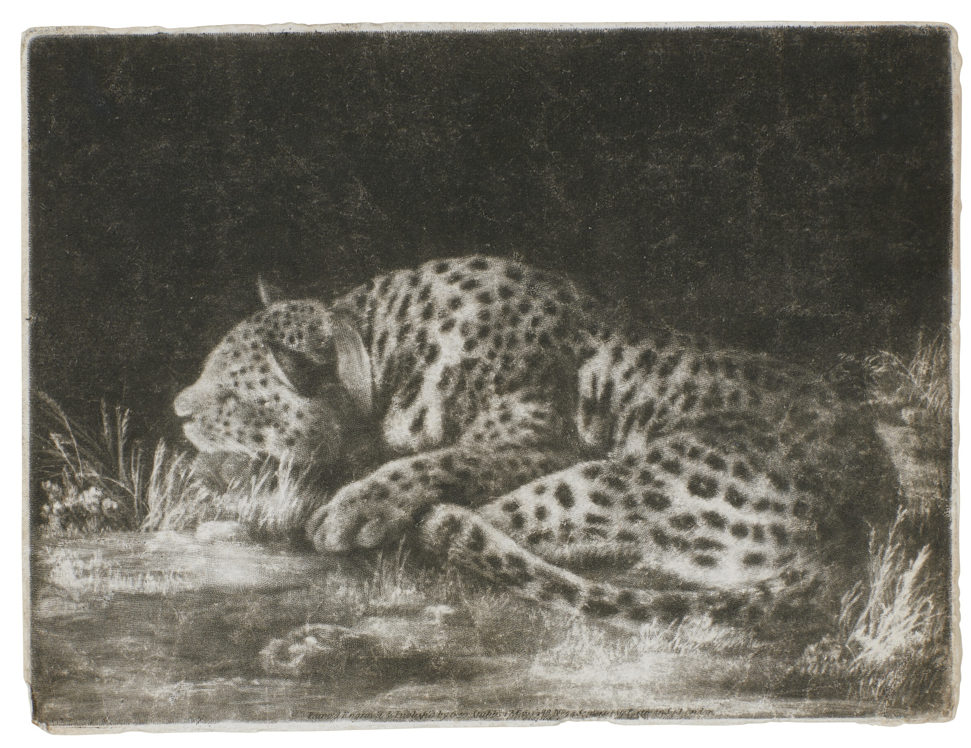 George Stubbs-A Sleeping Cheetah (Taylor 8)-1788