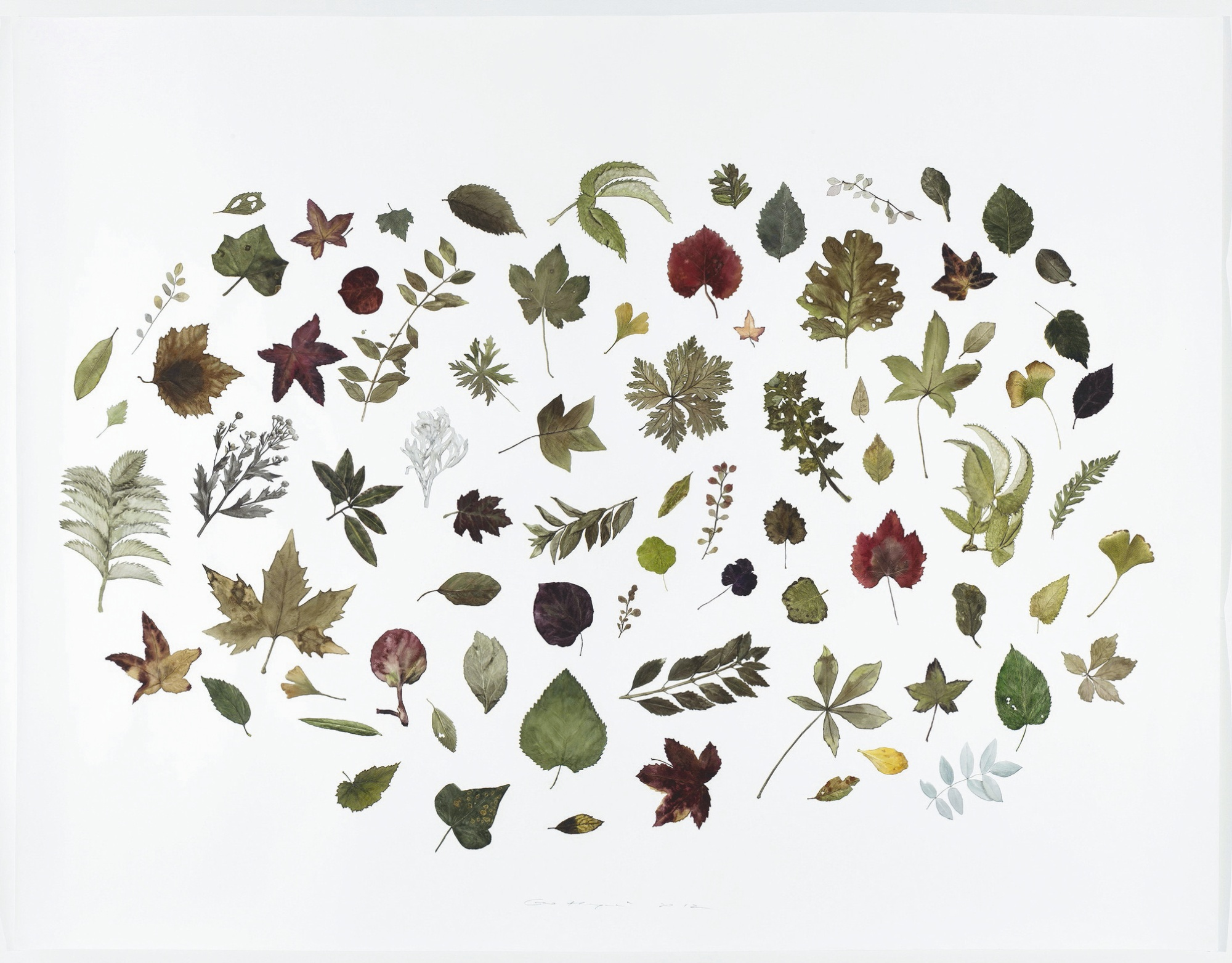 Guo Hongwei-Plant No. 12-2012