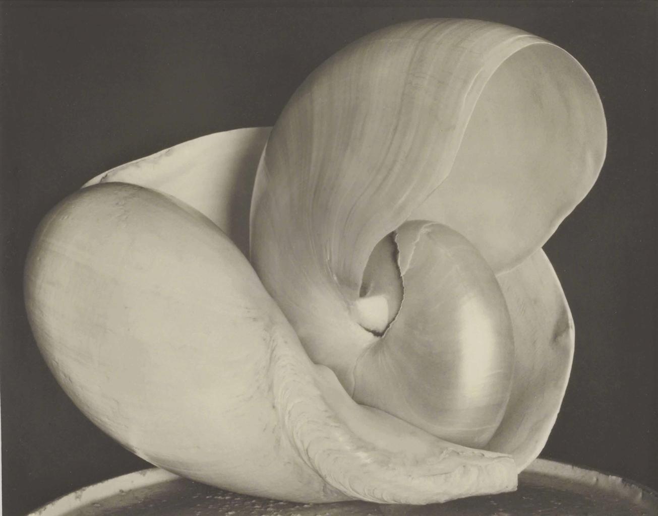 Edward Weston-Shells, 6S-1927