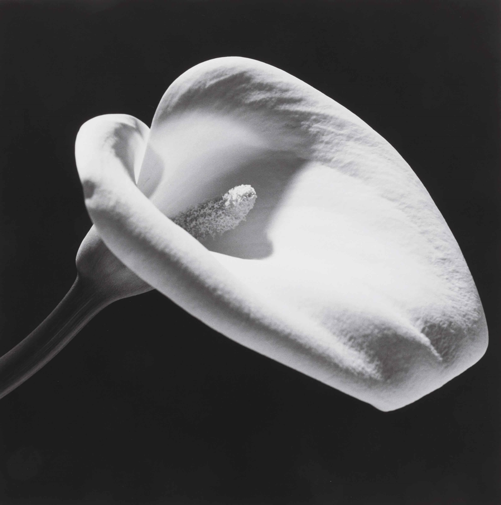 Robert Mapplethorpe-Calla Lily-1984