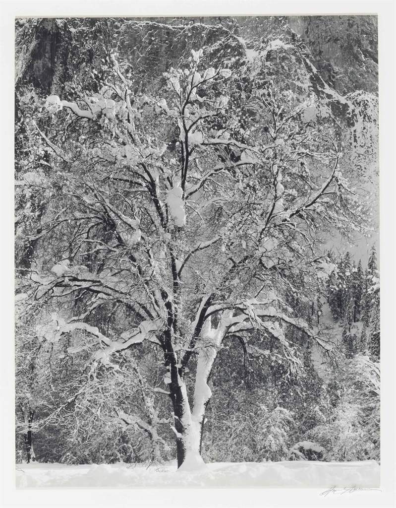 Ansel Adams-Oak Tree in Snow Against Cathedral Rock, Yosemite Valley, California-1933