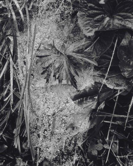 Paul Strand-Cobweb in Rain, Georgetown, Maine-1927