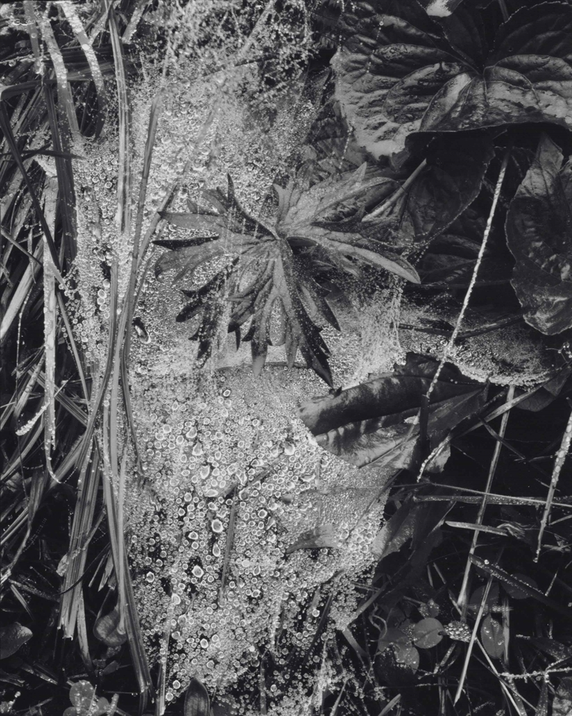 Paul Strand-Cobweb in Rain, Georgetown, Maine-1927