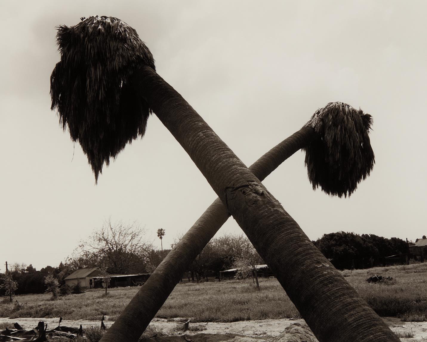 Robert Adams-Dead Palms, Partially Uprooted, Ontario, California-1983