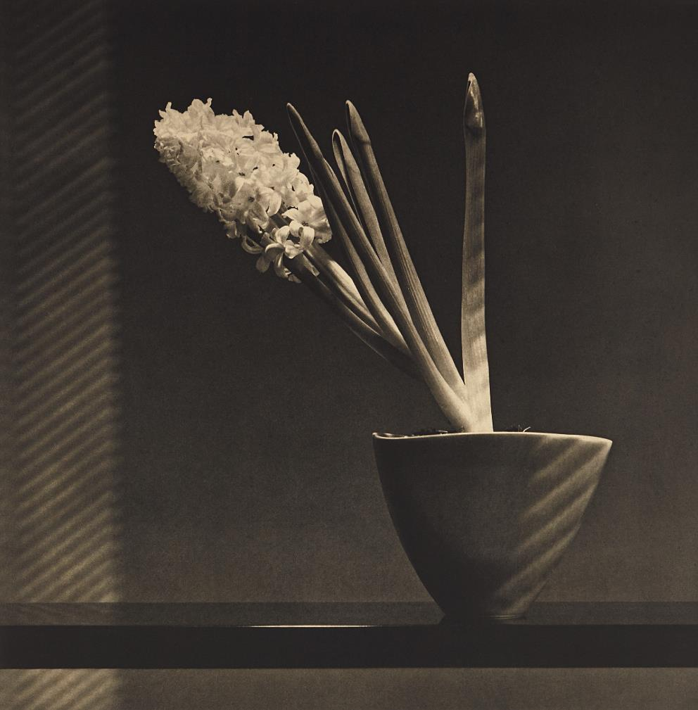 Robert Mapplethorpe-Hyacinth-1987