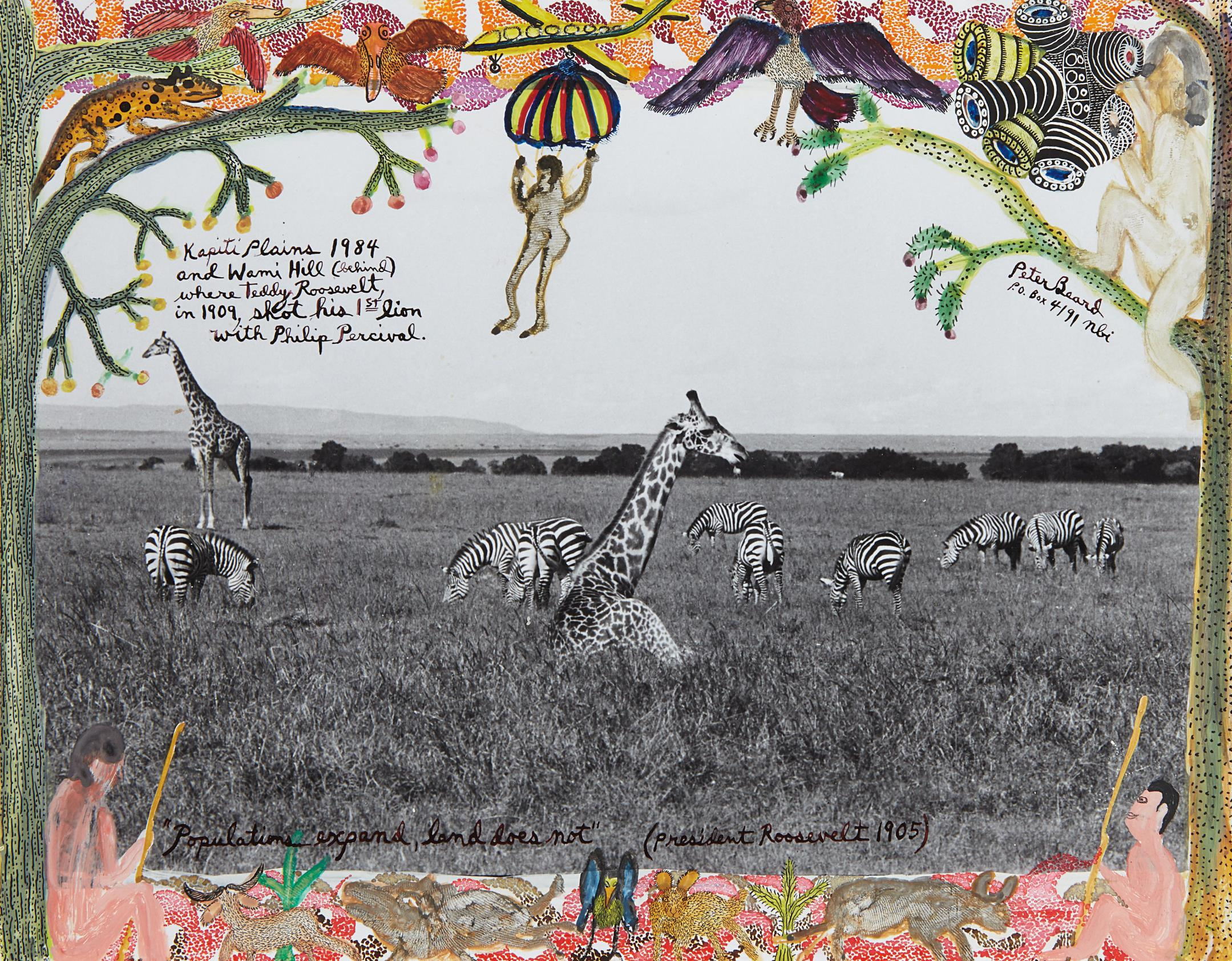 Peter Beard-Giraffes And Zebras-1964