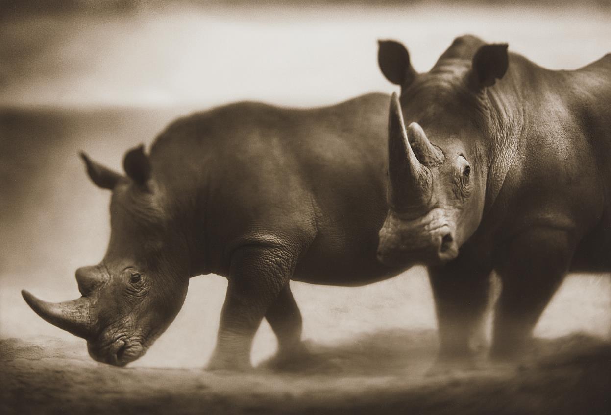 Nick Brandt-Two Rhinos, Lewa-2003