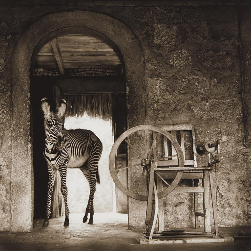 Nick Brandt-Zebra In Doorway With Loom, Lewa Downs-2002