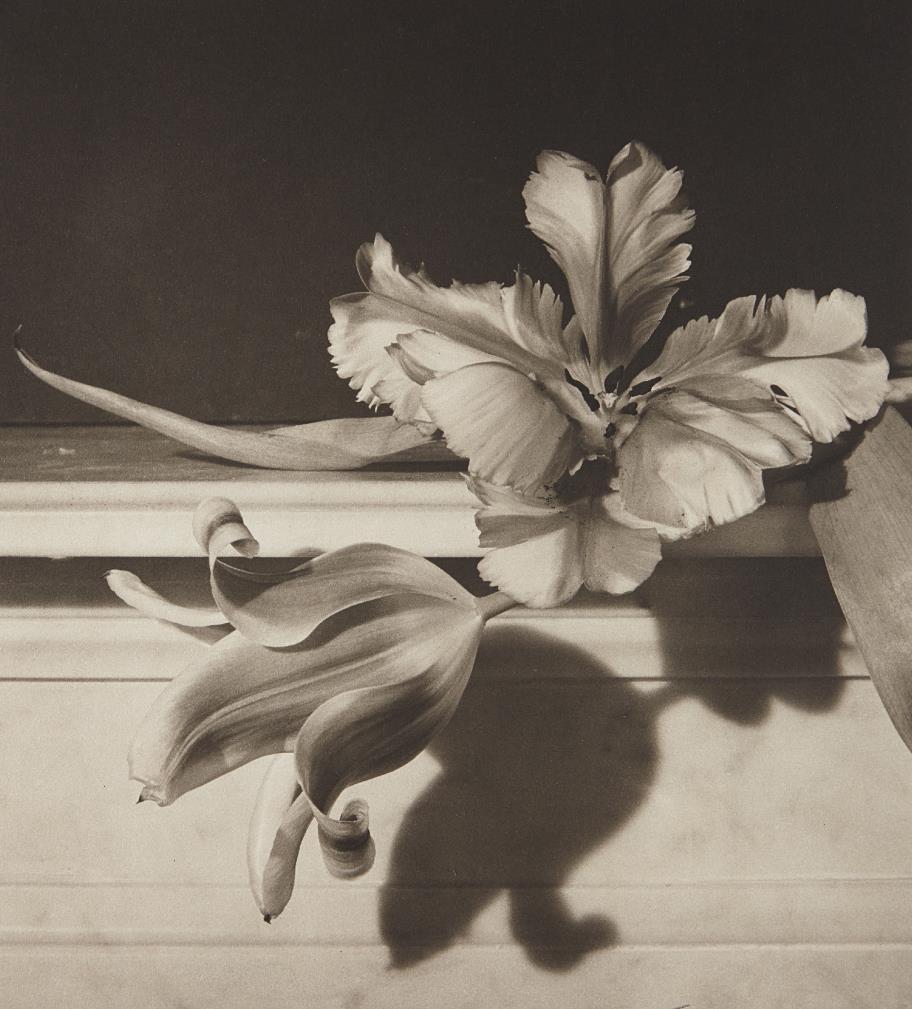 Horst P. Horst-Tulips, Oyster Bay, New York-1989