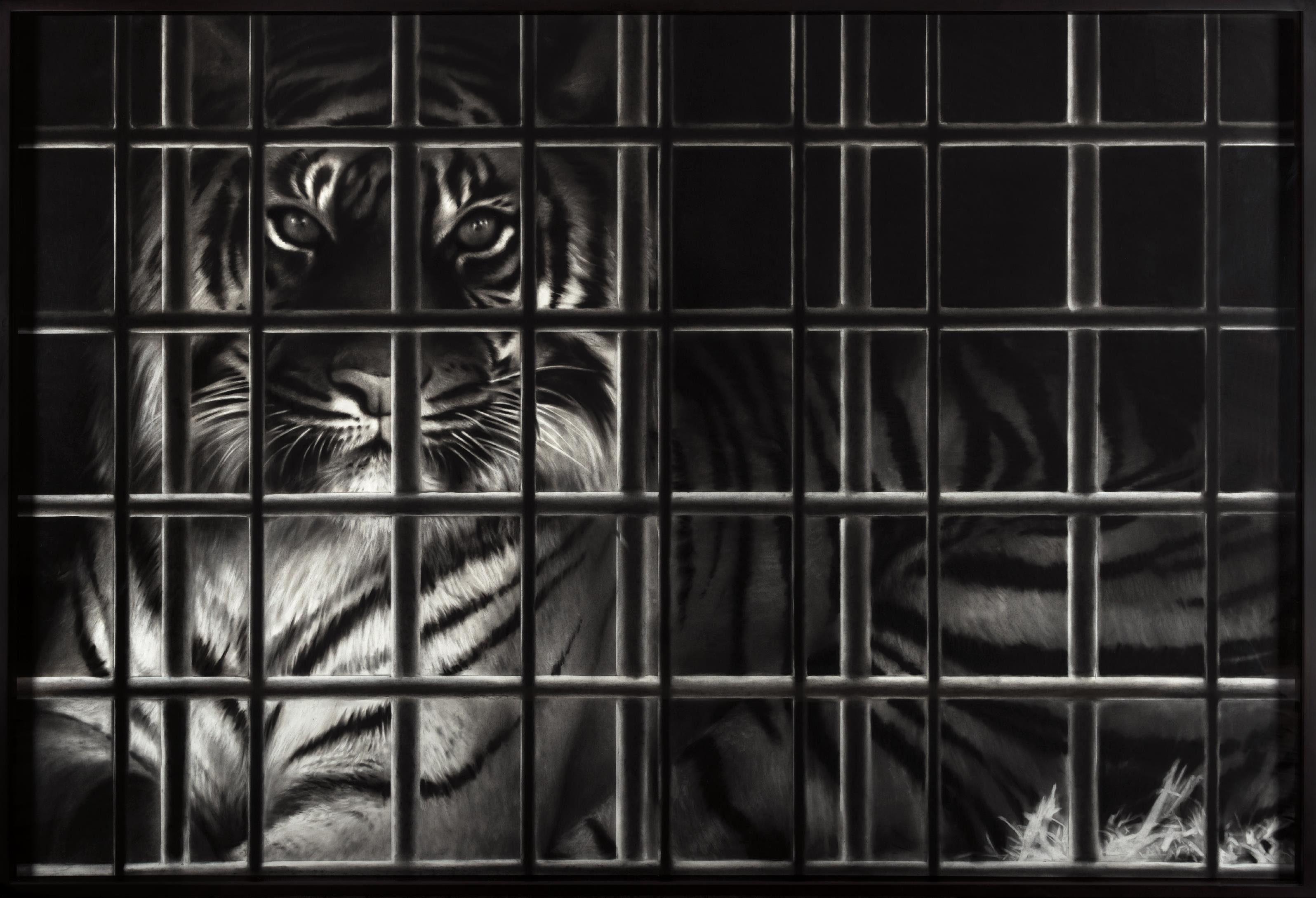 Robert Longo-Untitled (Tiger In A Cage, Lao Hu)-2010