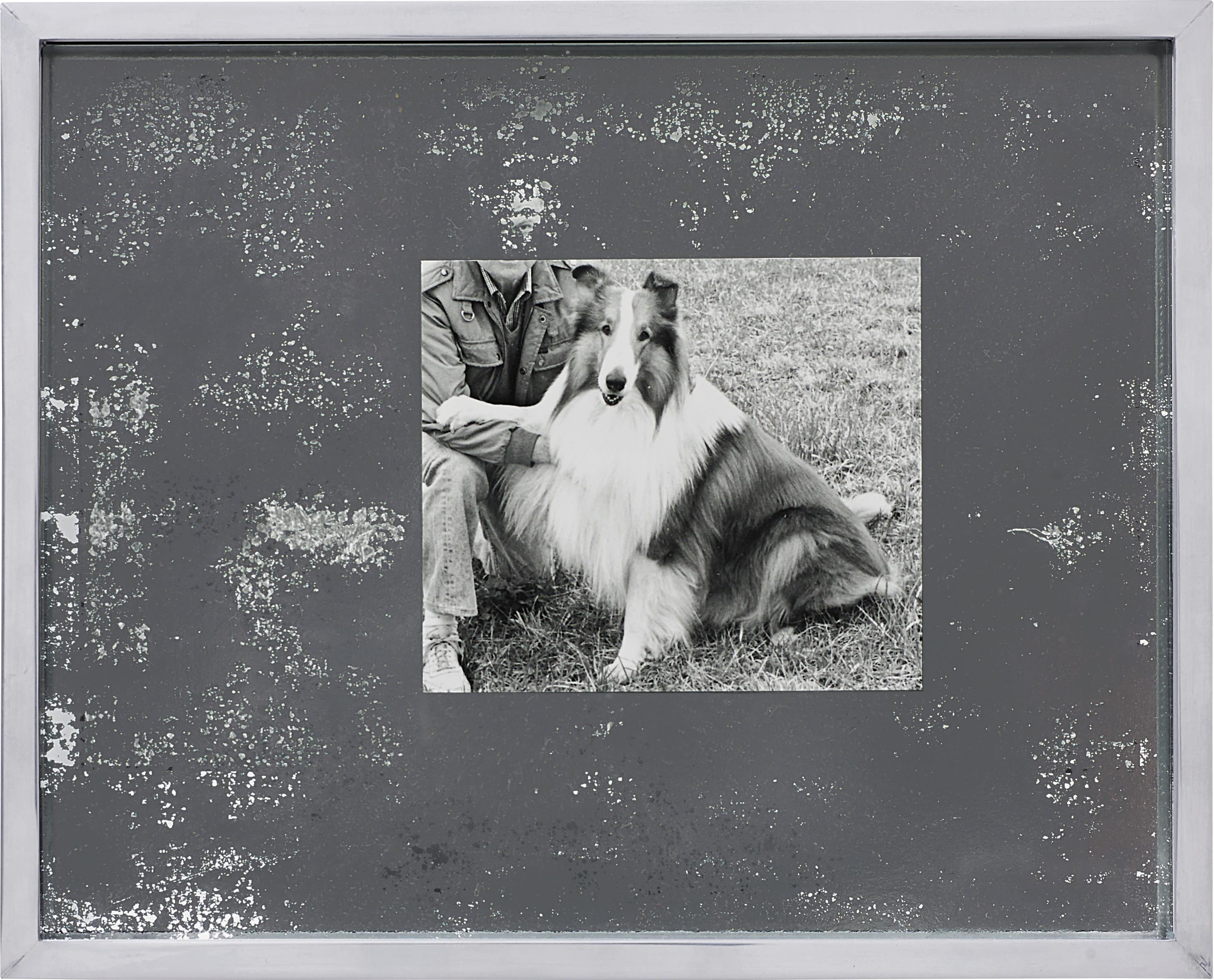 Elad Lassry-Collie (Silver 44)-2011