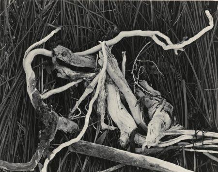 Edward Weston-Drift Twigs Mono Lake-1937