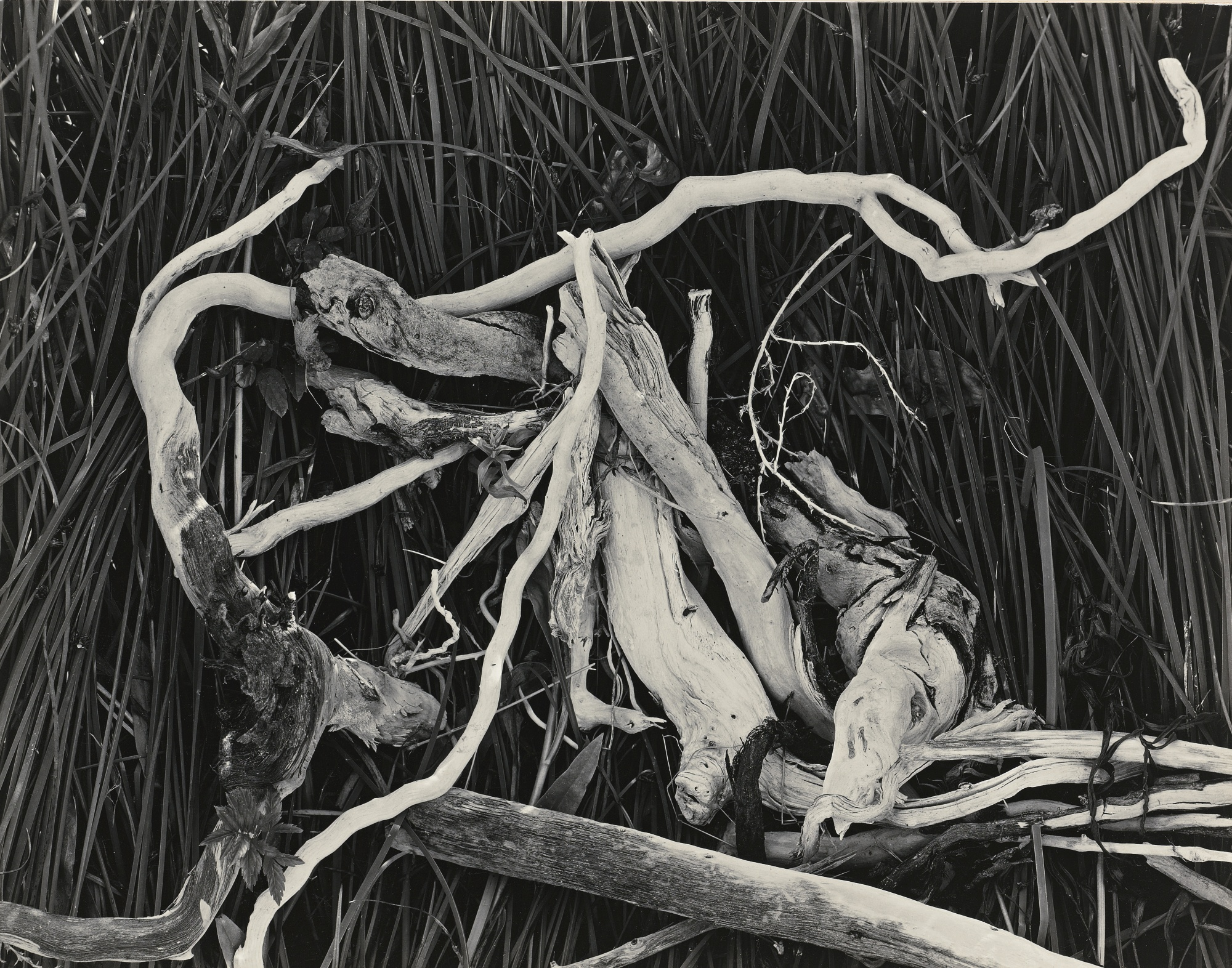 Edward Weston-Drift Twigs Mono Lake-1937