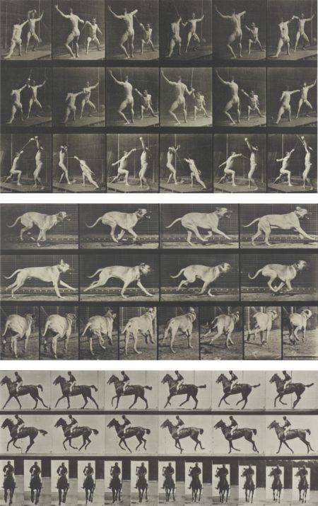 Eadweard Muybridge-Selected Motion Studies-1887