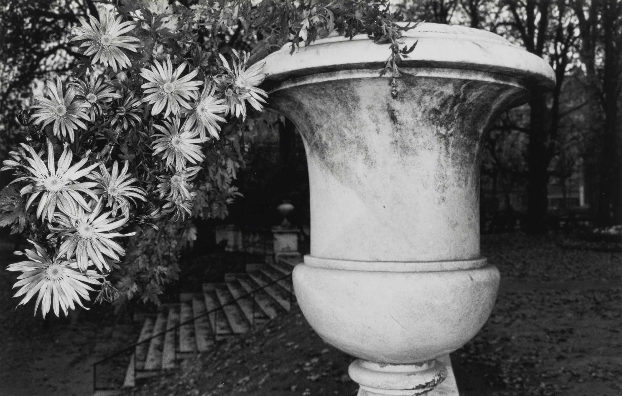 Lee Friedlander-Photographs Of Flowers (Florida/New York: Graphicstudio/Haywire Press, 1975)-1974