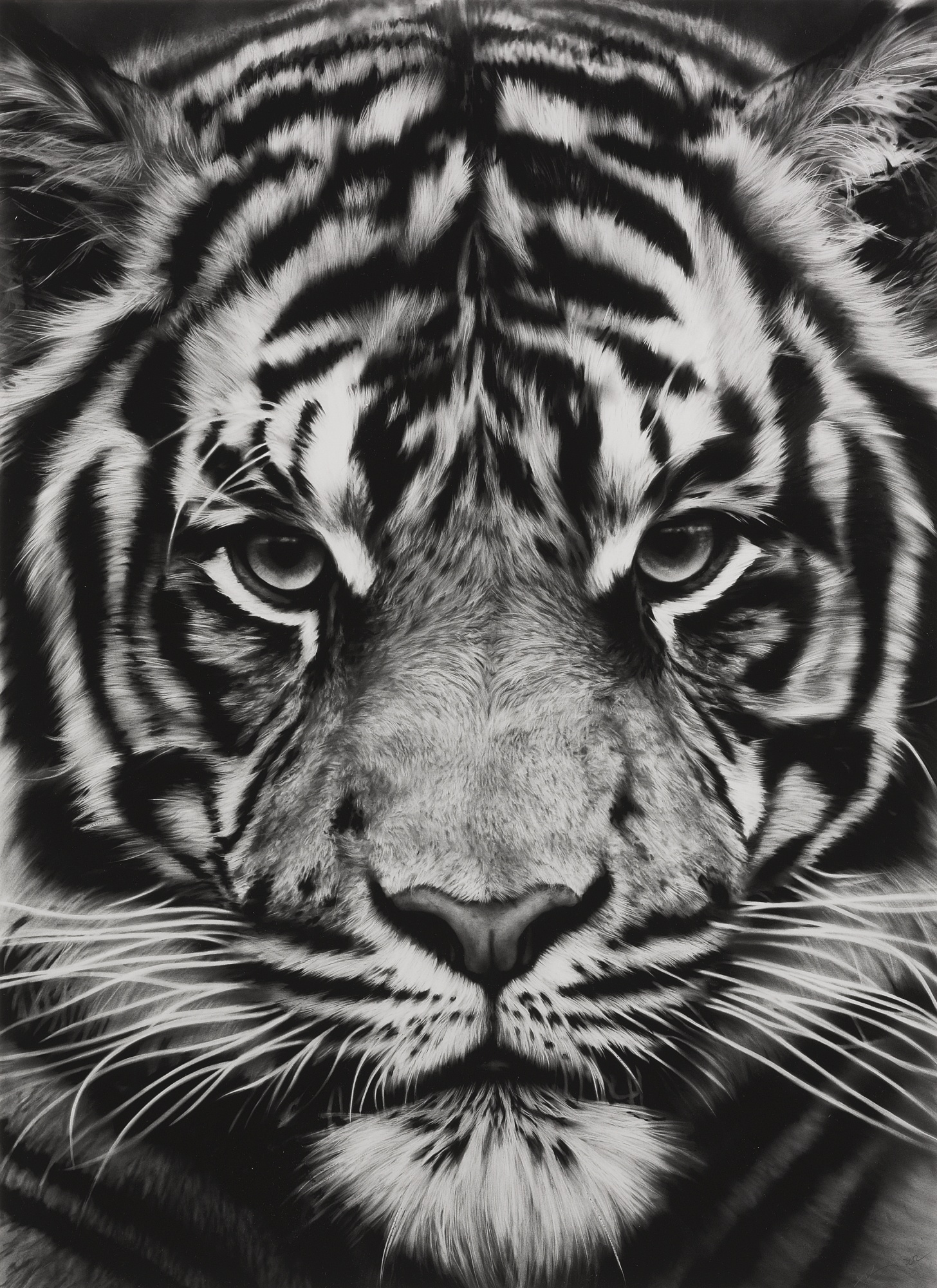 Robert Longo-Untitled (Tiger)-2012