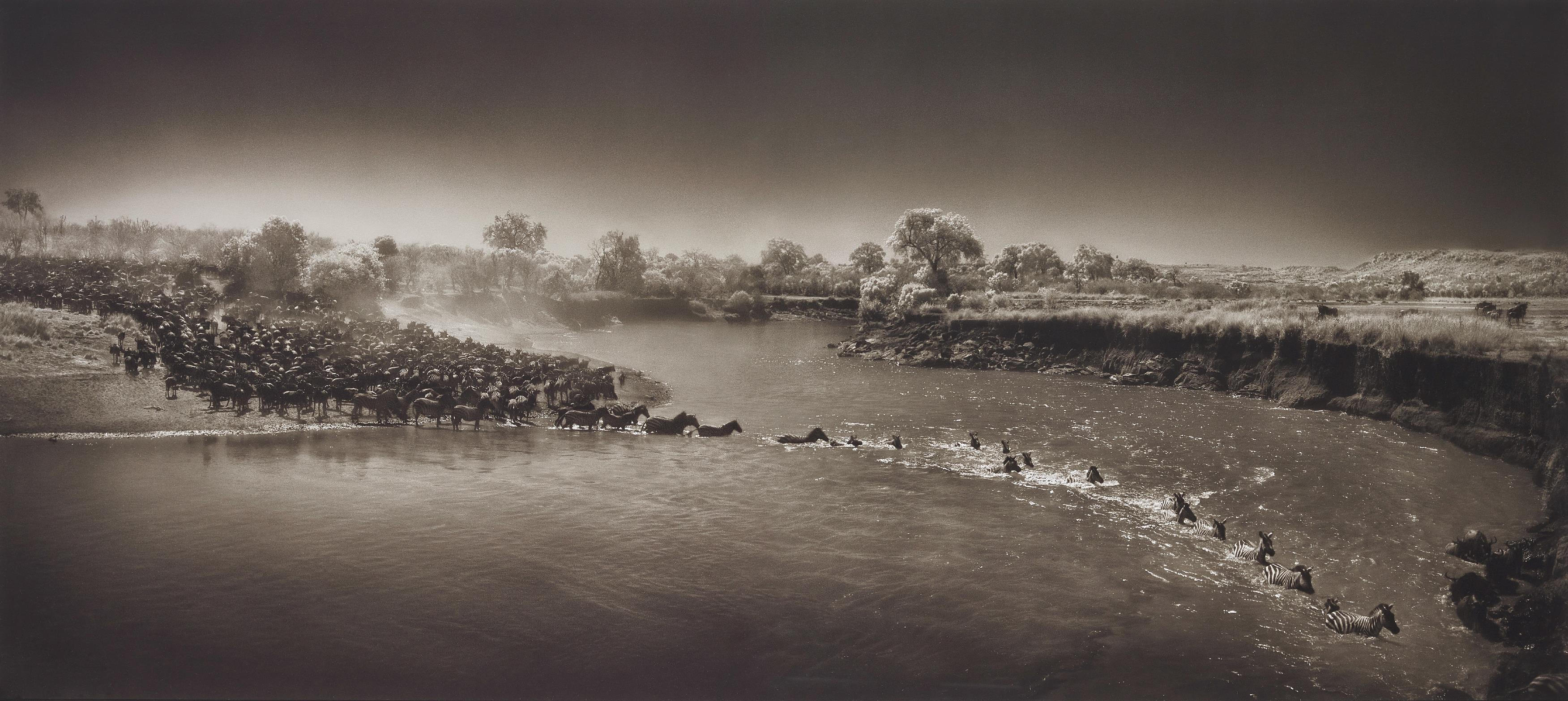 Nick Brandt-Zebras Crossing River, Maasai Mara-2006