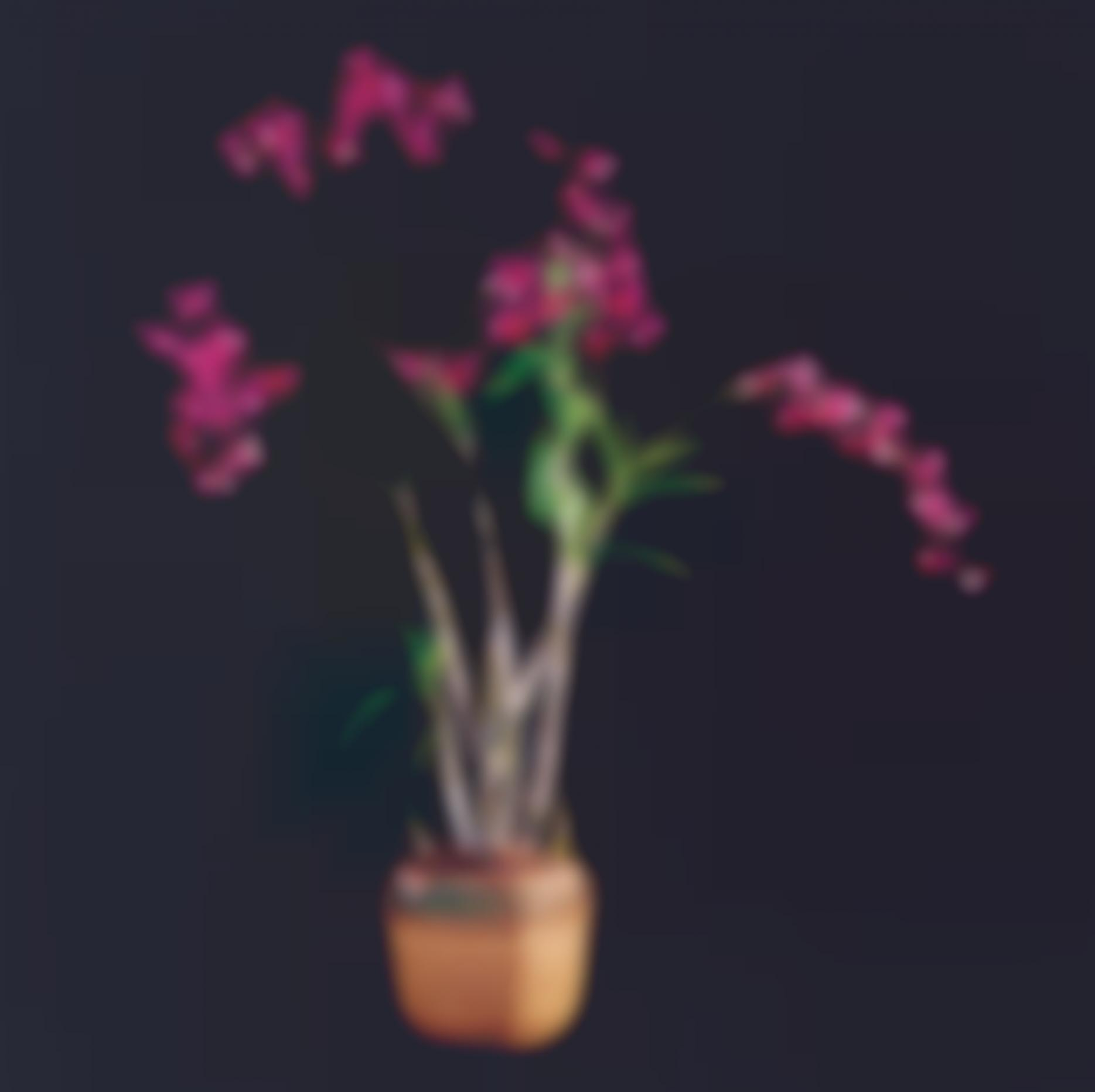 Robert Mapplethorpe-Orchids-1989