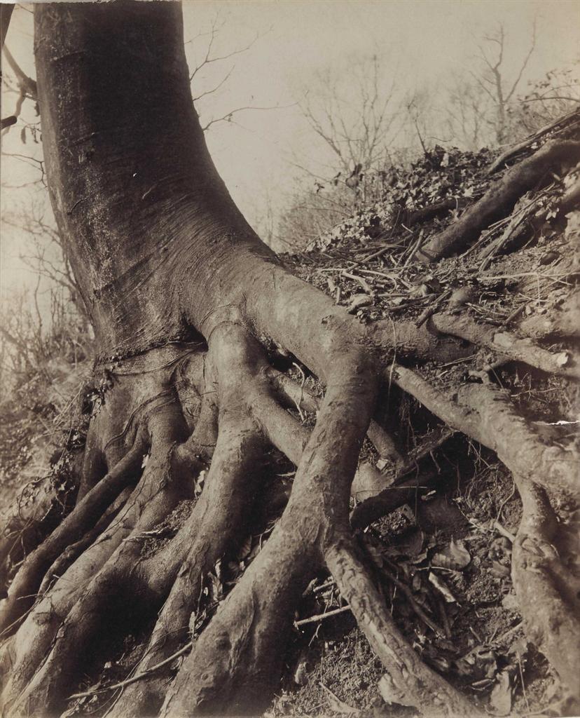 Eugene Atget-Saint-Cloud (arbres)-1924