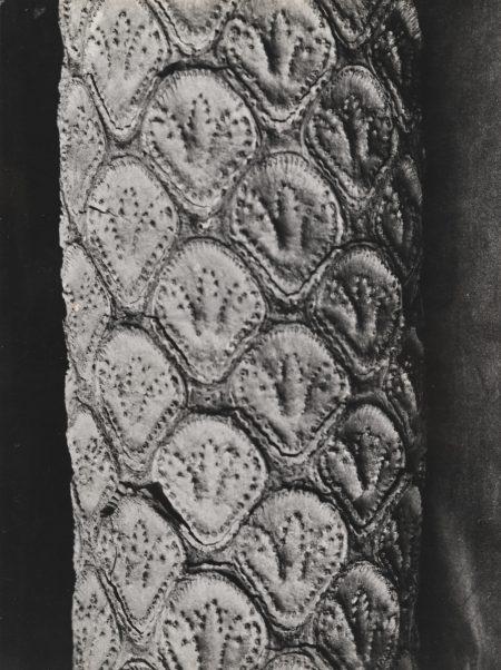 Else Thalemann-Quatre Etudes Botaniques Vers-1930