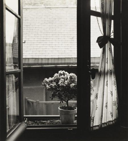 Emmanuel Sougez-Etude De Fleurs-1934