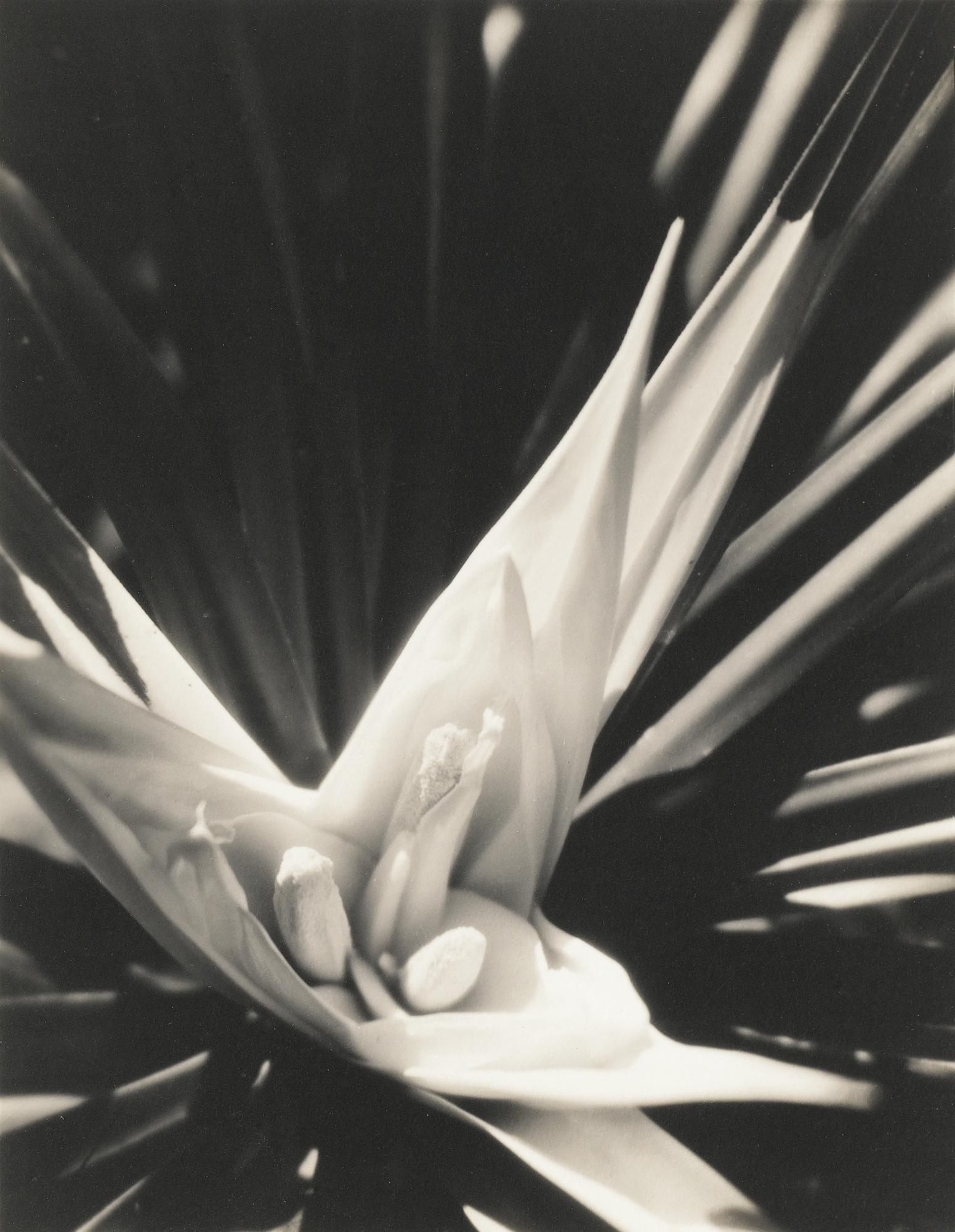Karl Struss-Plant Study San Francisco Vers-1930
