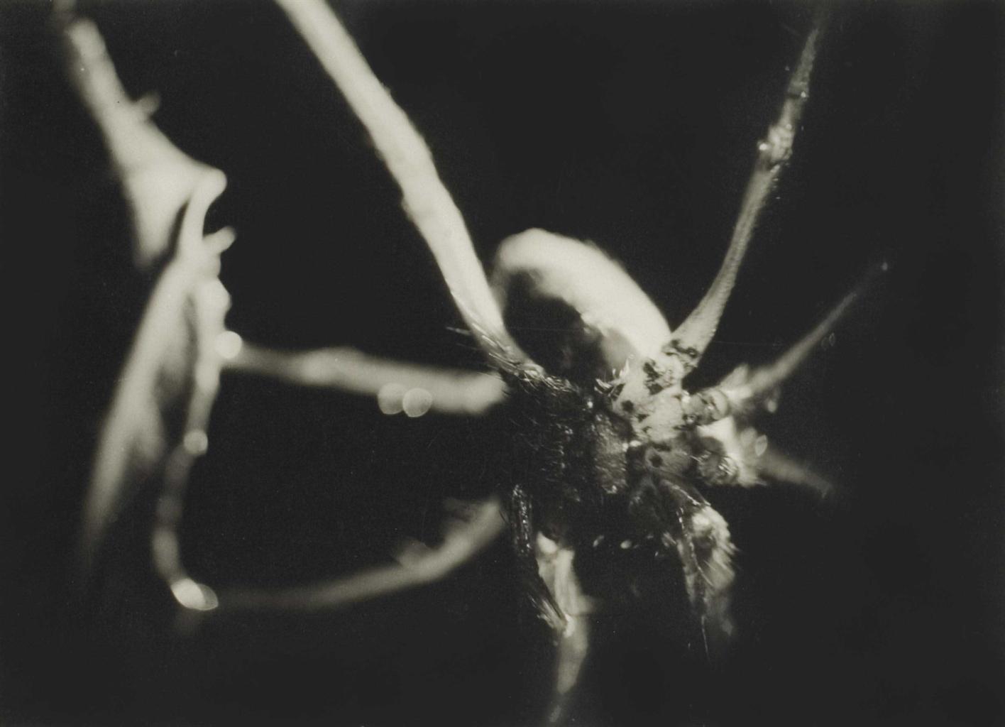 Jean Painleve-Araignee-1929