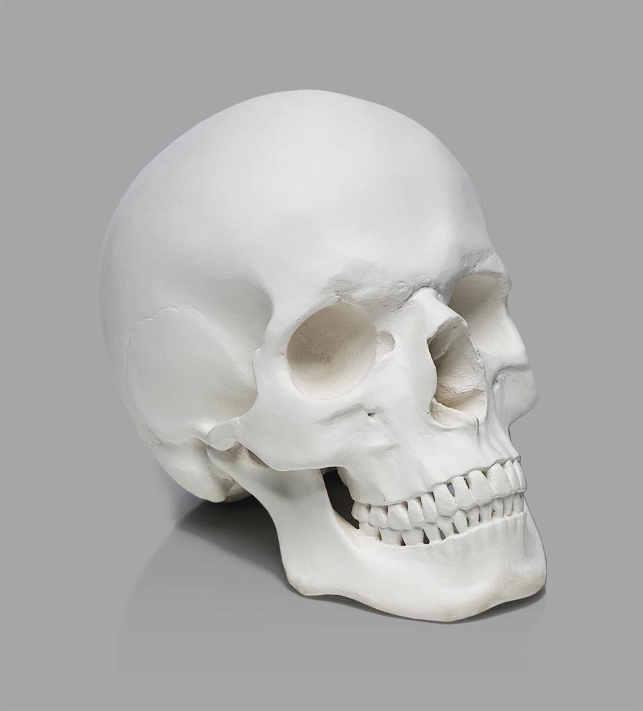 Katharina Fritsch-Totenkopf (Skull)-1998