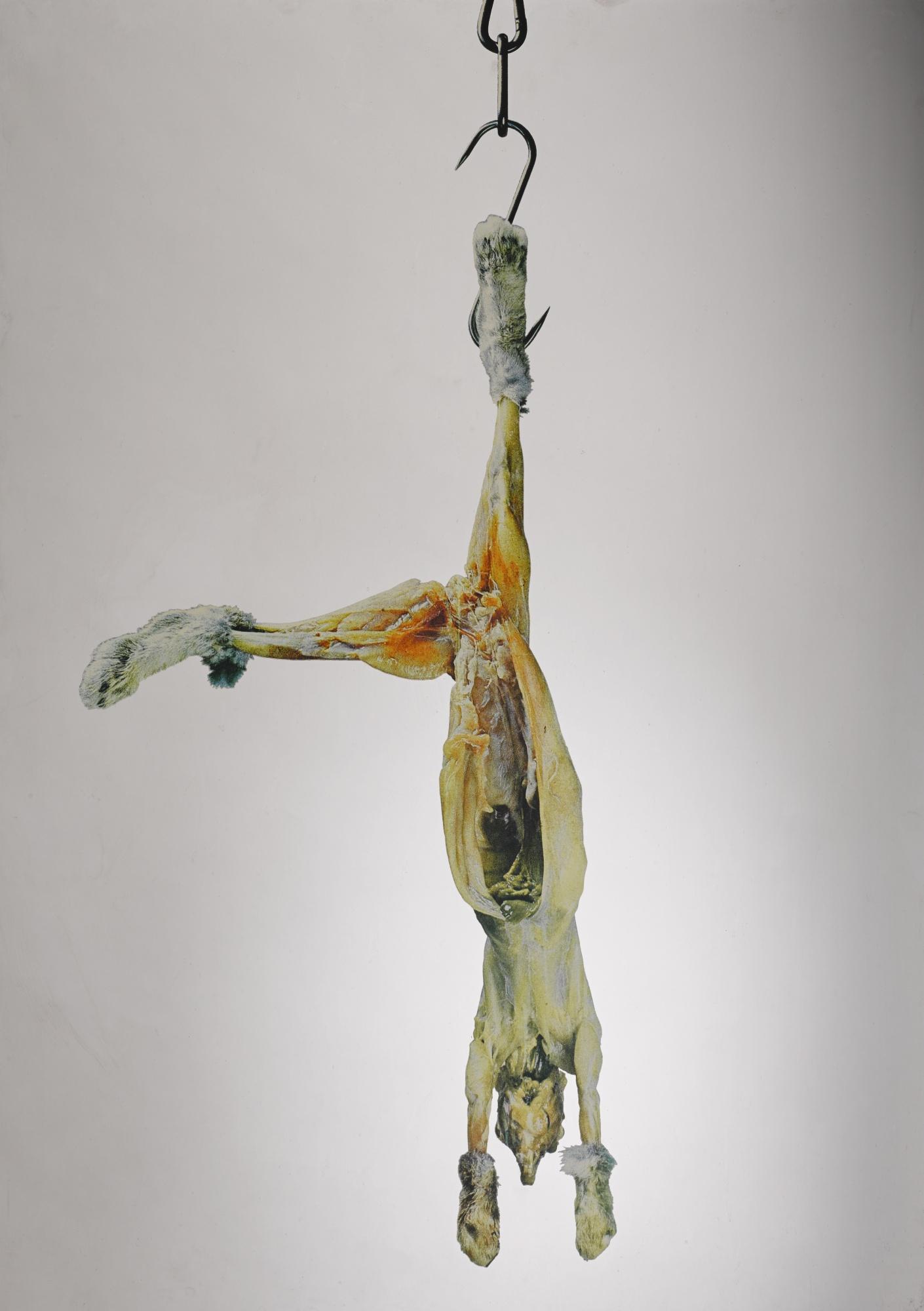 Michelangelo Pistoletto-Coniglio Appeso-1972