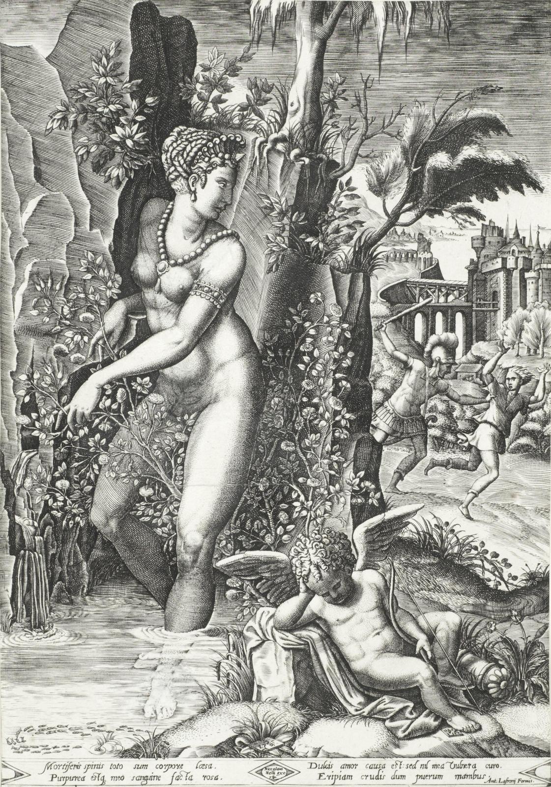 Giorgio Mantovano Ghisi-After Giorgio Mantovano Ghisi - Venus and the Rose (Boorsch 22)-1564