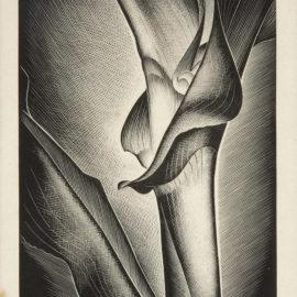 Paul Landacre-Growing Corn-1938