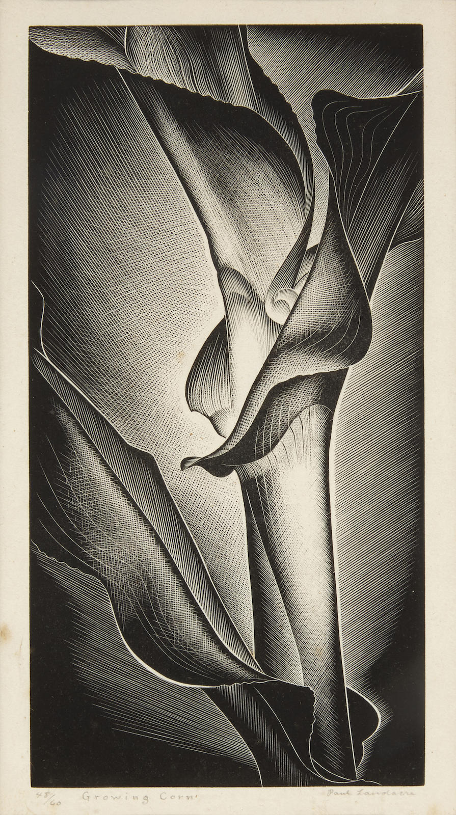 Paul Landacre-Growing Corn-1938
