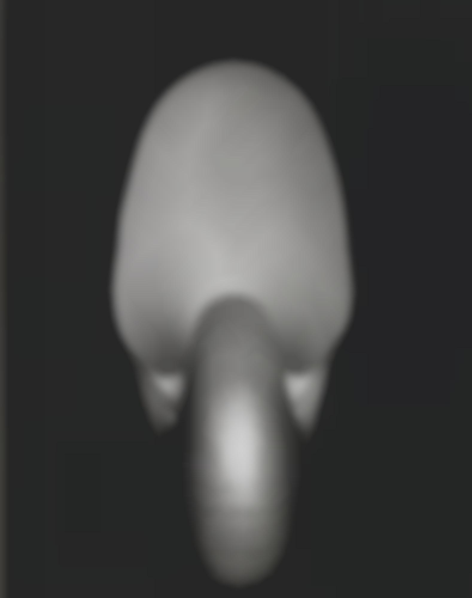 Edward Weston-Shell (Nautilus)-1927