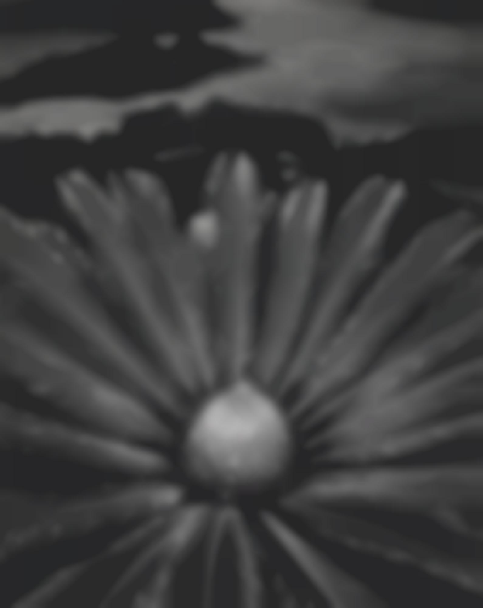Don Worth-Cycas Revoluta, Hilo Hawaii-1977