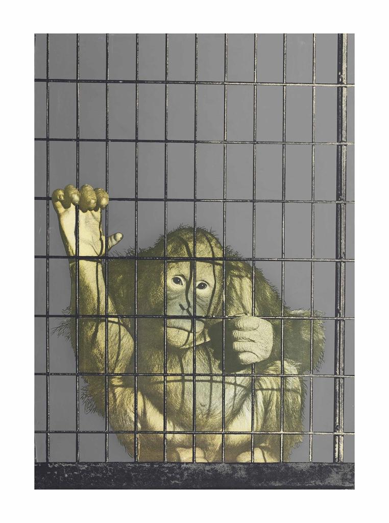 Michelangelo Pistoletto-Scimmia in Gabbia-1972