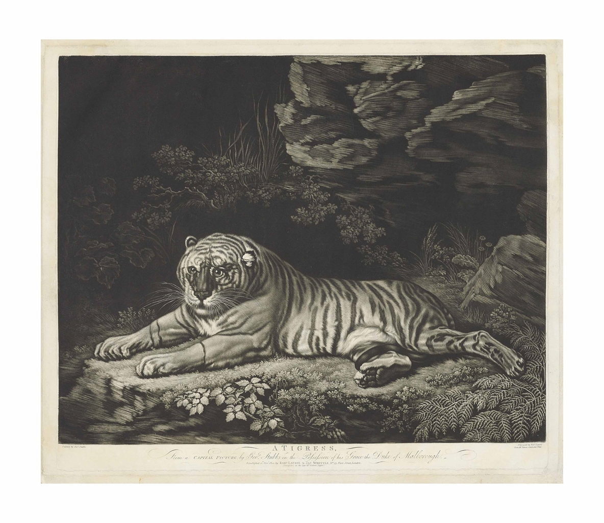 John Dixon-After John Dixon - A Tigress lying on the ground-1780