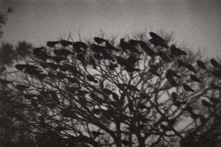 Masahisa Fukase-Kanazawa from Ravens-1977