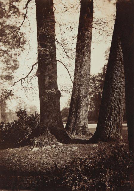 Gustave Le Gray-Troncs d'Arbres, Fontainebleau-1855