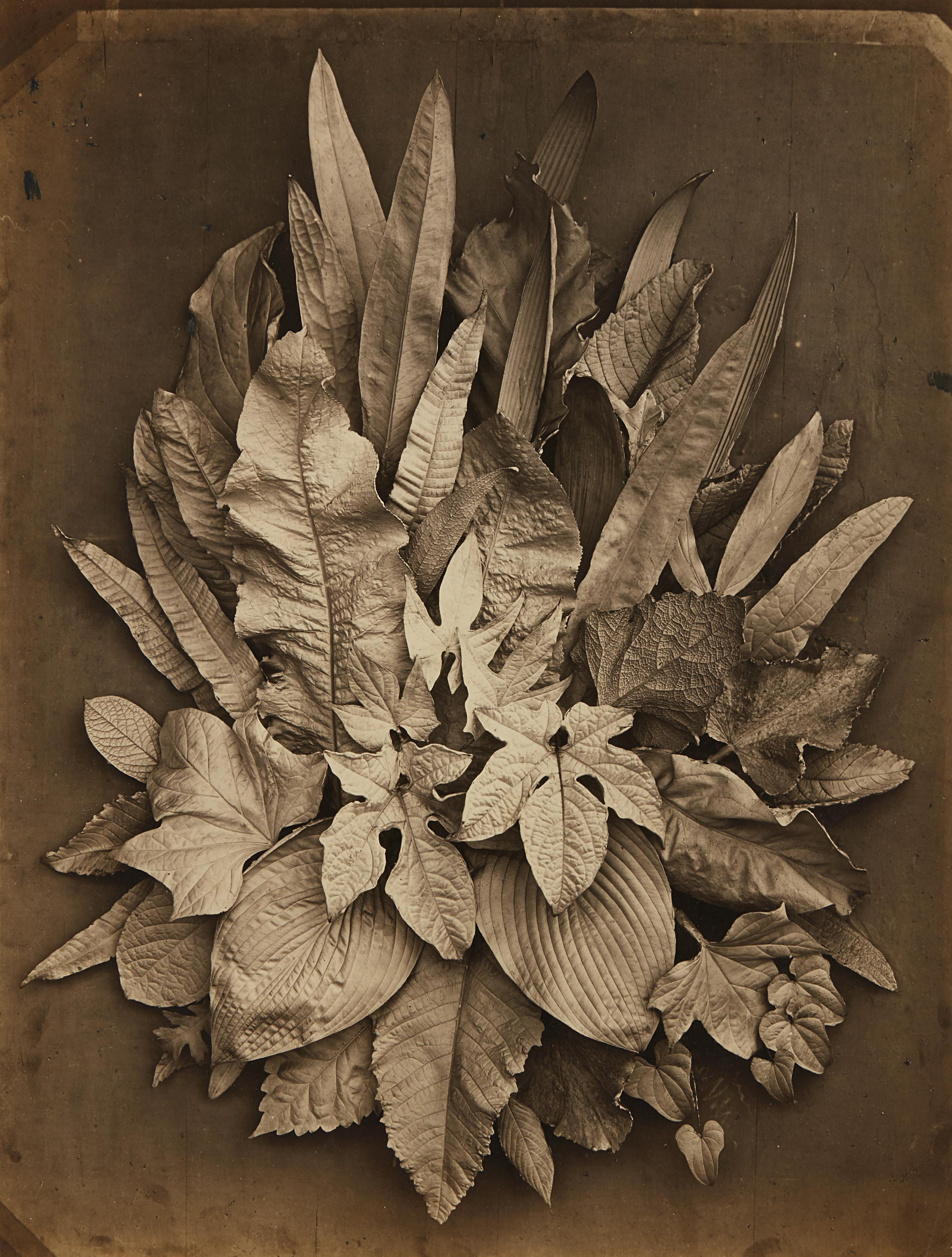 Charles Aubry-Untitled (study of leaves)-1864